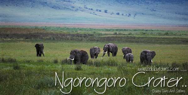 Ngorongoro Crater Tanzania with Bobby Tours