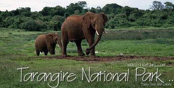 Tarangire National Park with Bobby Tours Tanzania