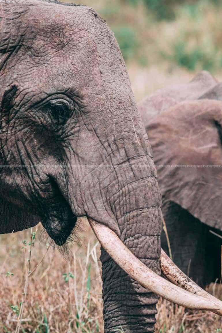 Elephant - Ngorongoro Crater