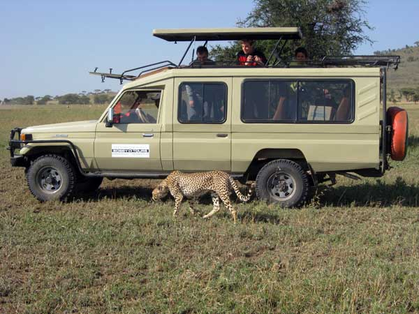 Safari Vehicles - Bobby Tours Tanzania Safaris, mount